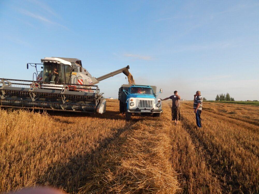 Ready-made agribusiness in the Stavropol Territory