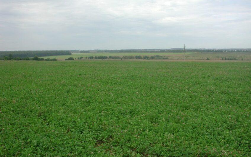 Land for pasture and crops in the Vladimir region