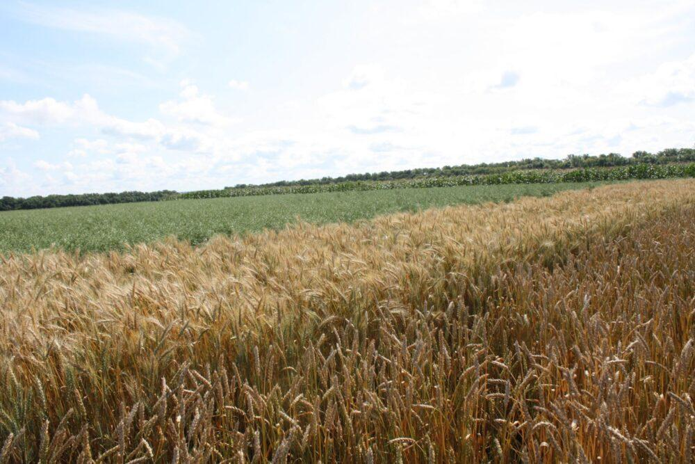 Land plot of 6457 acres in Siberia