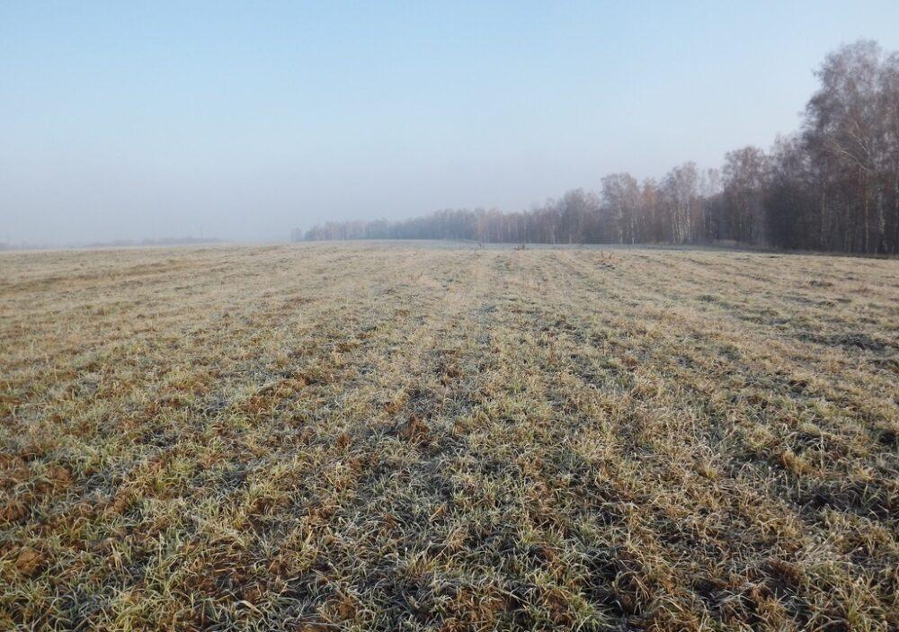 Agricultural land in the Bryansk region