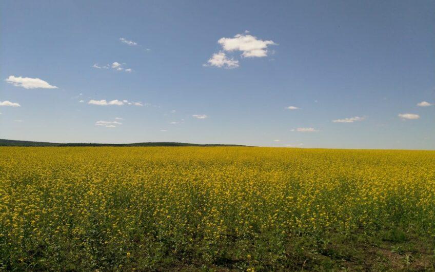 Land for grain 2421 acres in Bashkiria