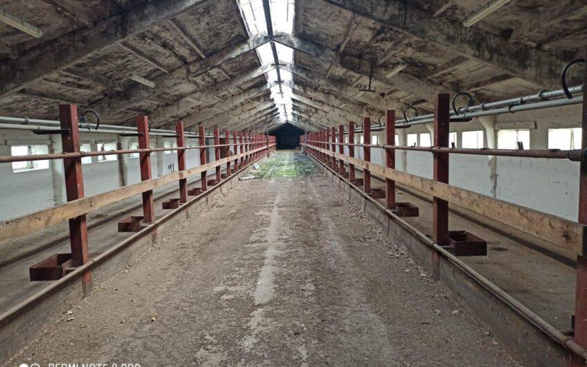 Dairy farm in the Tula region