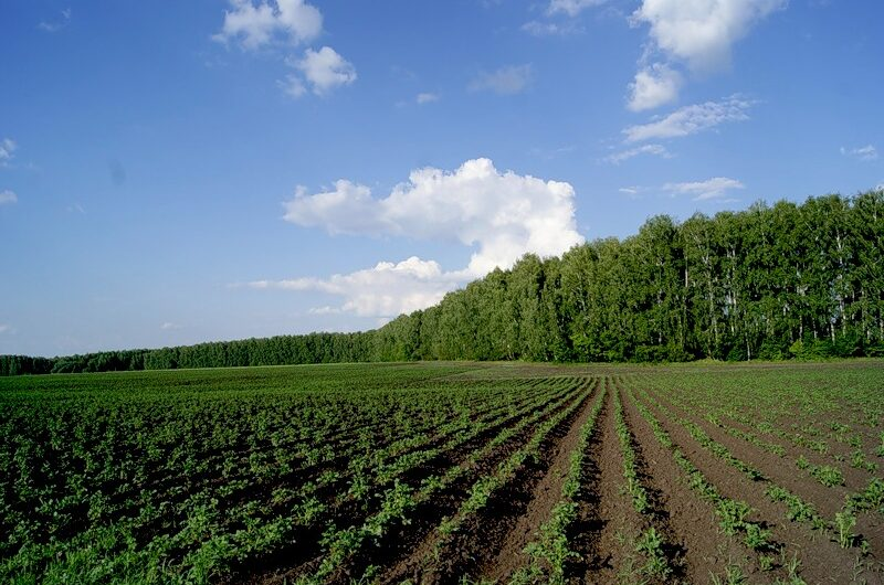 Rent agricultural land in Russia