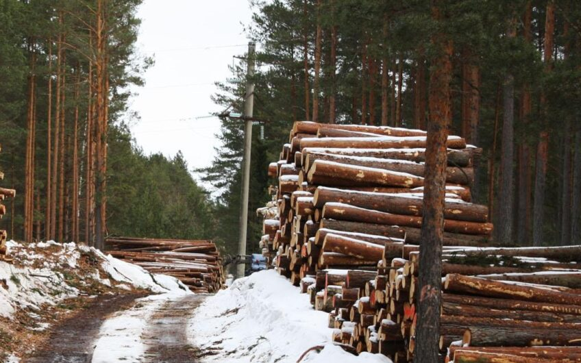 Lease of land with Russian forest for timber business
